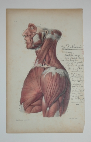 Medical prints