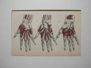 Medische Prenten